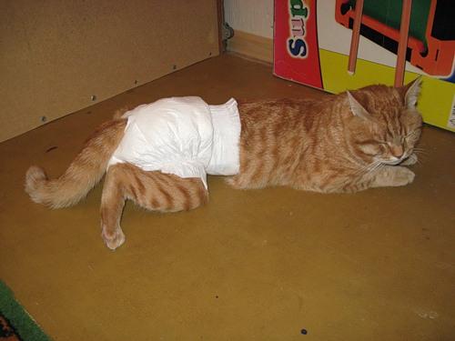 Непослушным котам для успешного сбора мочи необходимо надеть памперс, чтобы зафиксировать мочесборник