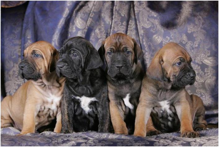Приобретайте щенка только в специализированных питомниках, предварительно изучив подробную информацию о заводчике. Никогда не покупайте щенка у частных лиц из интернета