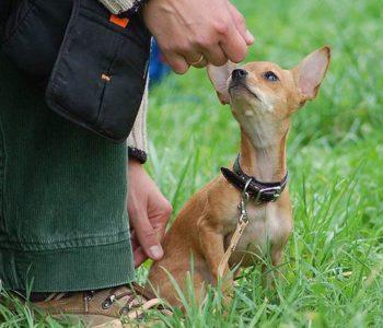 ОКД для собак