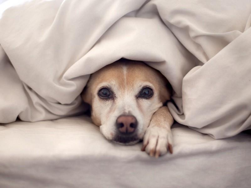 Обезболивающие для собак
