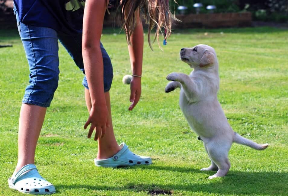 Огромная роль в выстраивании отношений с щенком отводится эмоциональным реакциям хозяина