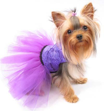 -для-йорков-своими-руками Одежда для собак своими руками