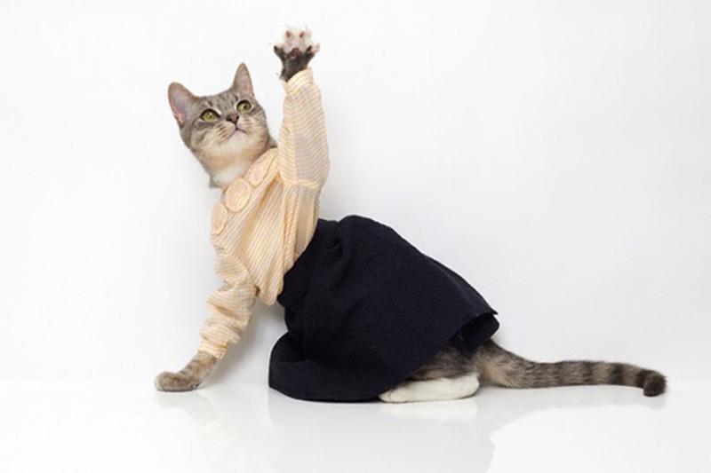 -для-кошек-своими-руками-1 Как сделать галстук для кота своими руками