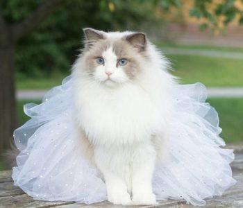 одежда для кошек своими руками пошаговые инструкции