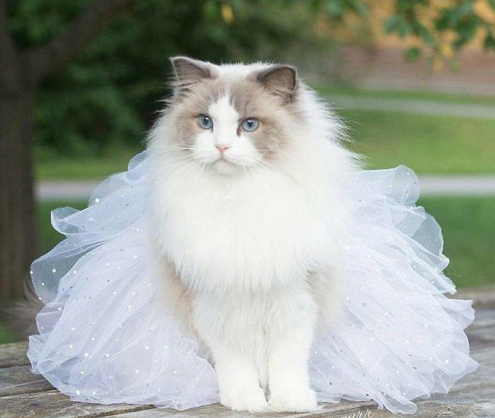 -для-кошек-своими-руками-2 Как сделать галстук для кота своими руками
