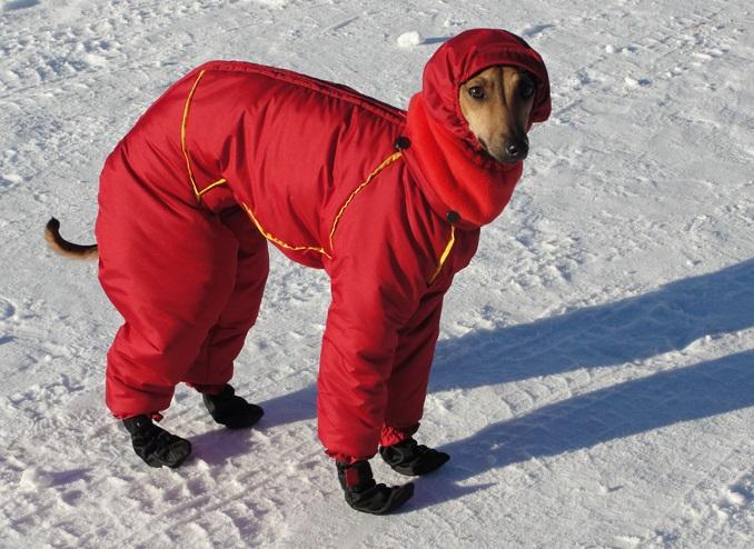 Одежда позволяет некоторым породам не застудить тело в холодную погоду