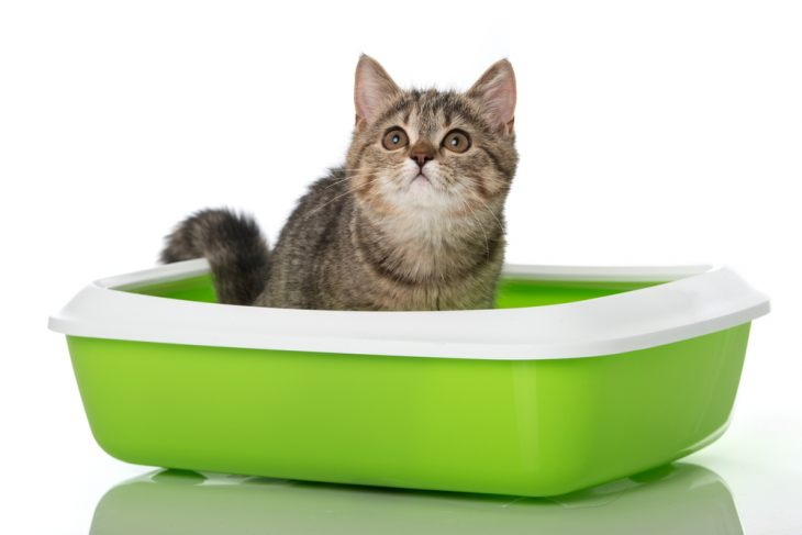Оказывать помощь коту при запоре можно после позволения ветеринара