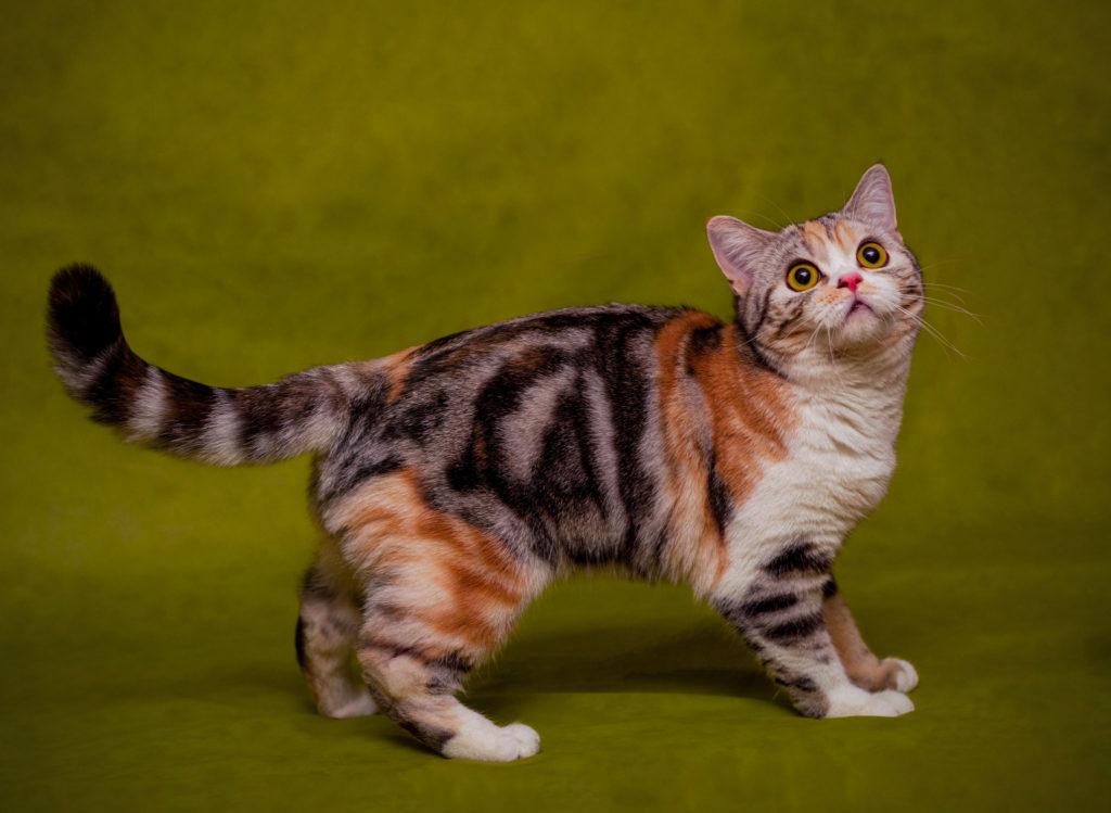 фото расцветок кошек этом году