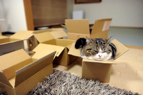 Осваивание в новой квартире дается кошкам с некоторым трудом
