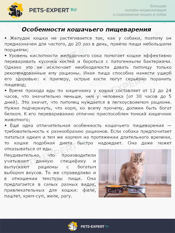Особенности кошачьего пищеварения