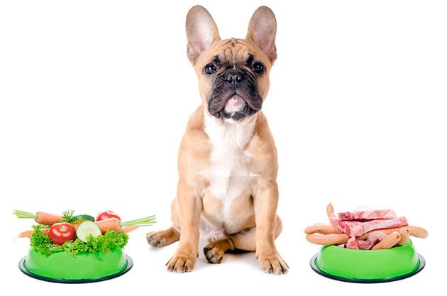 Особенности питания французского бульдога