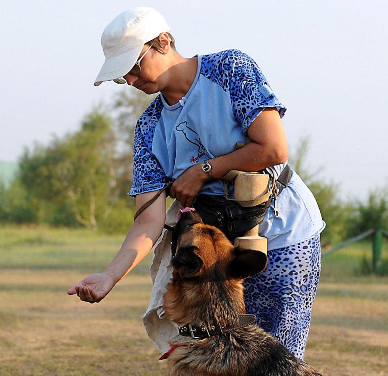 Очень важно научить собаку не брать корм из рук незнакомца