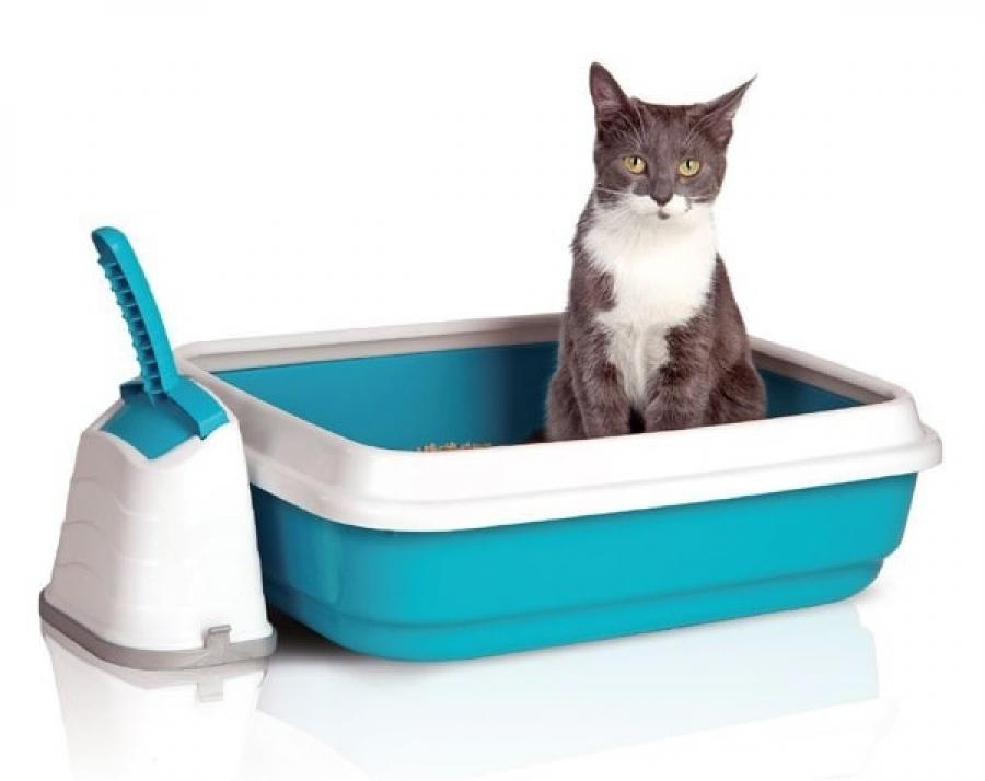 Перед использованием лотка, кошки должны убедиться в его гигиеничности