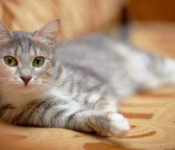 Перед тем как брать кота, следует взвесить все за и против