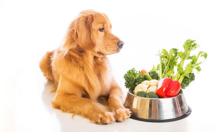 Питание и уход за собакой должны соответствовать ее возрастной категории