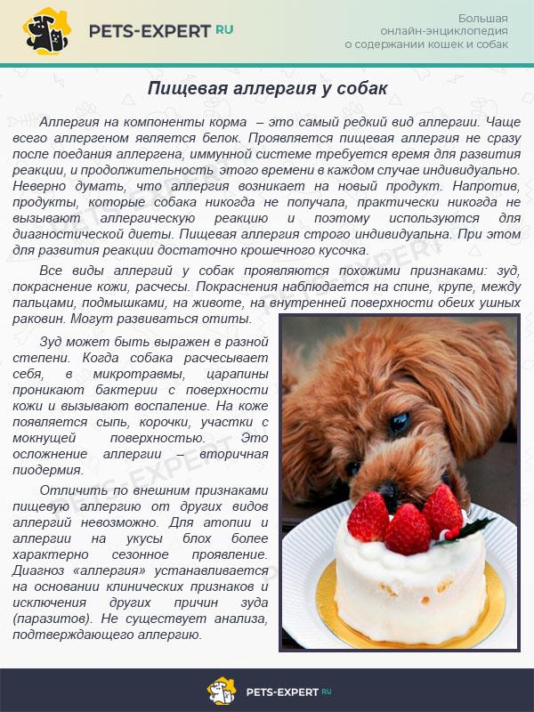 Пищевая аллергия у собак