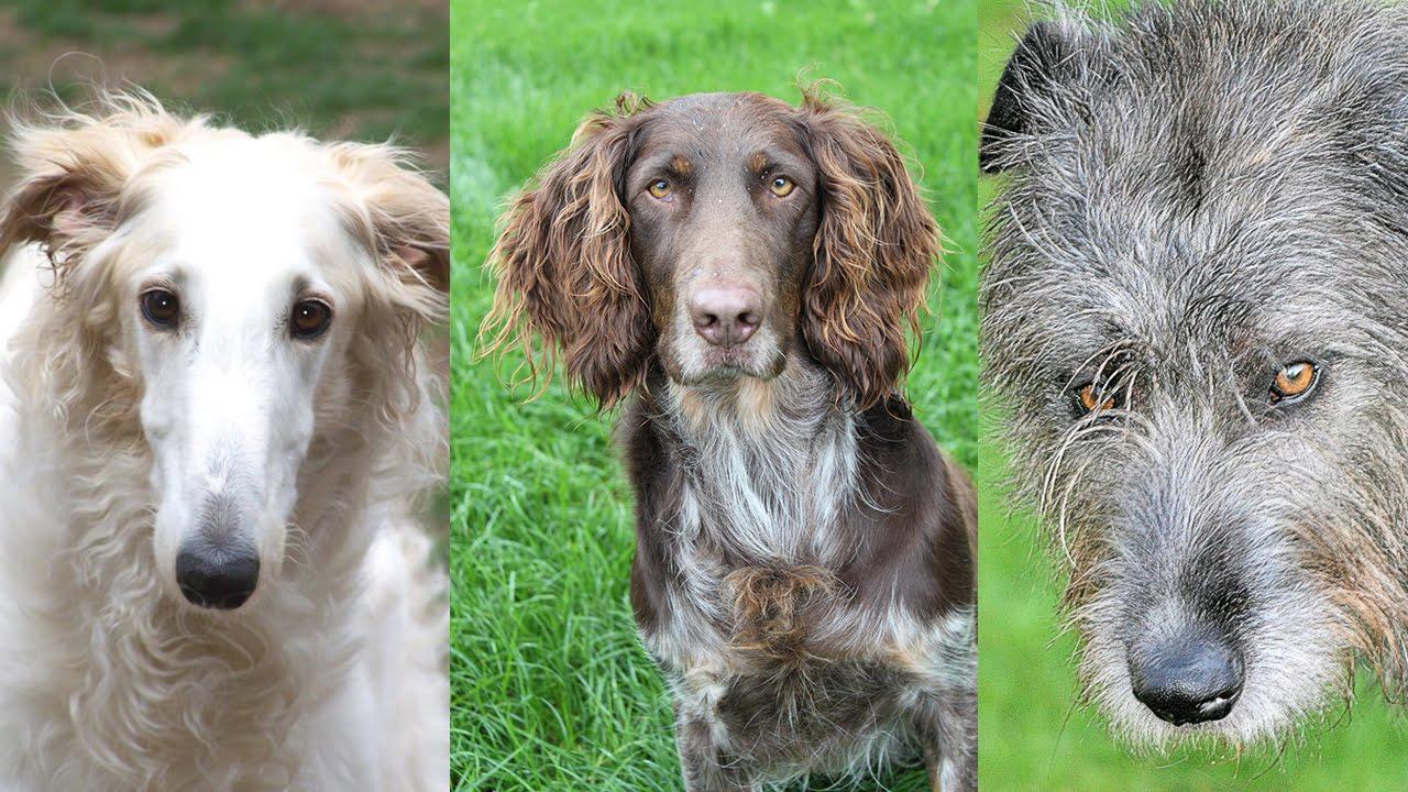 Повадки охотничьих собак рассчитаны на тщательное вынюхивание территории и распознавание дичи