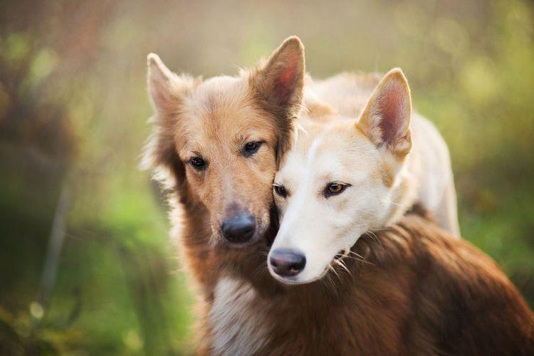 Половые различия у собак не сразу бросаются в глаза, поскольку поведение зависит прежде всего от воспитания