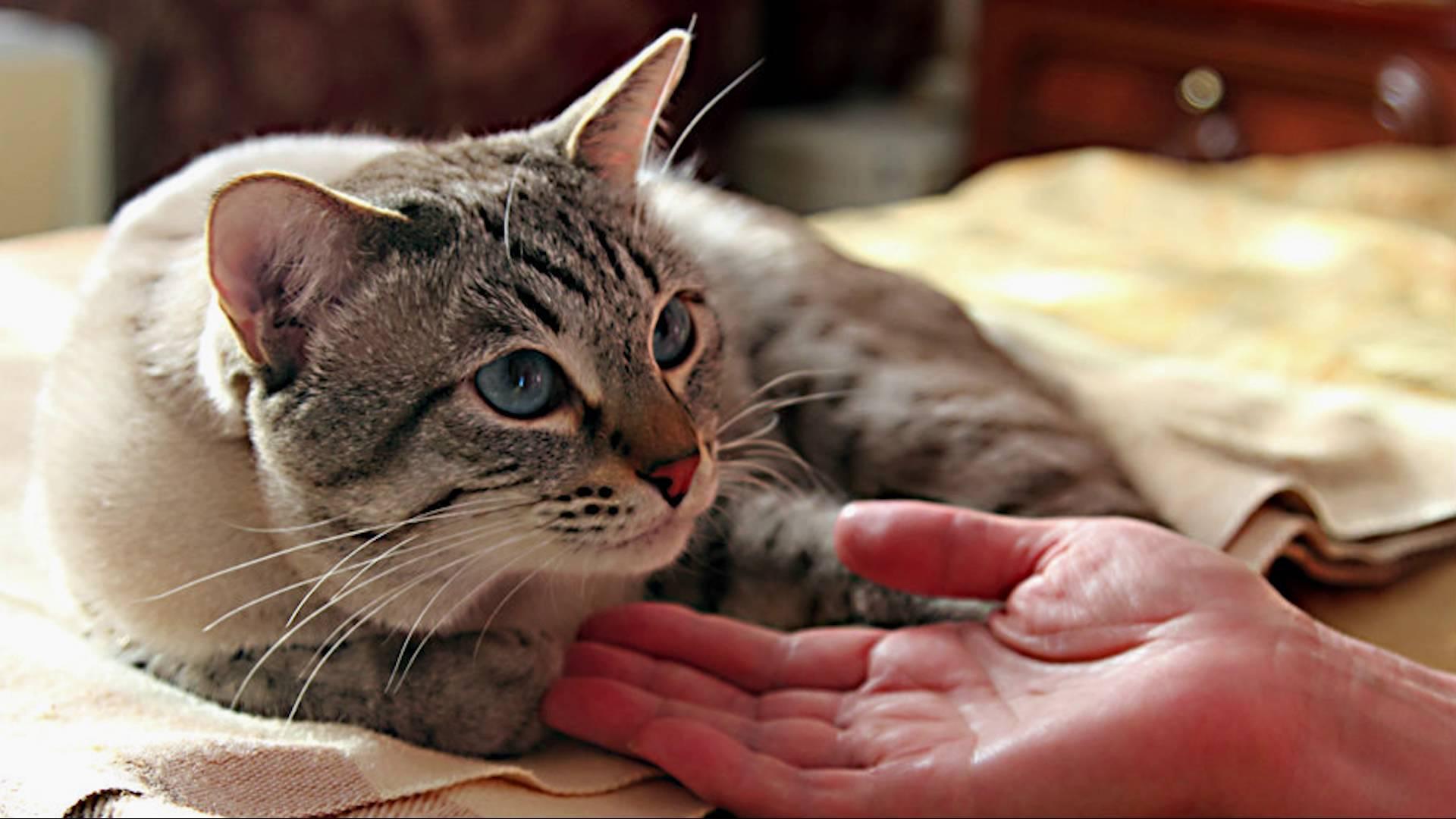После операции кот нуждается в покое и заботе