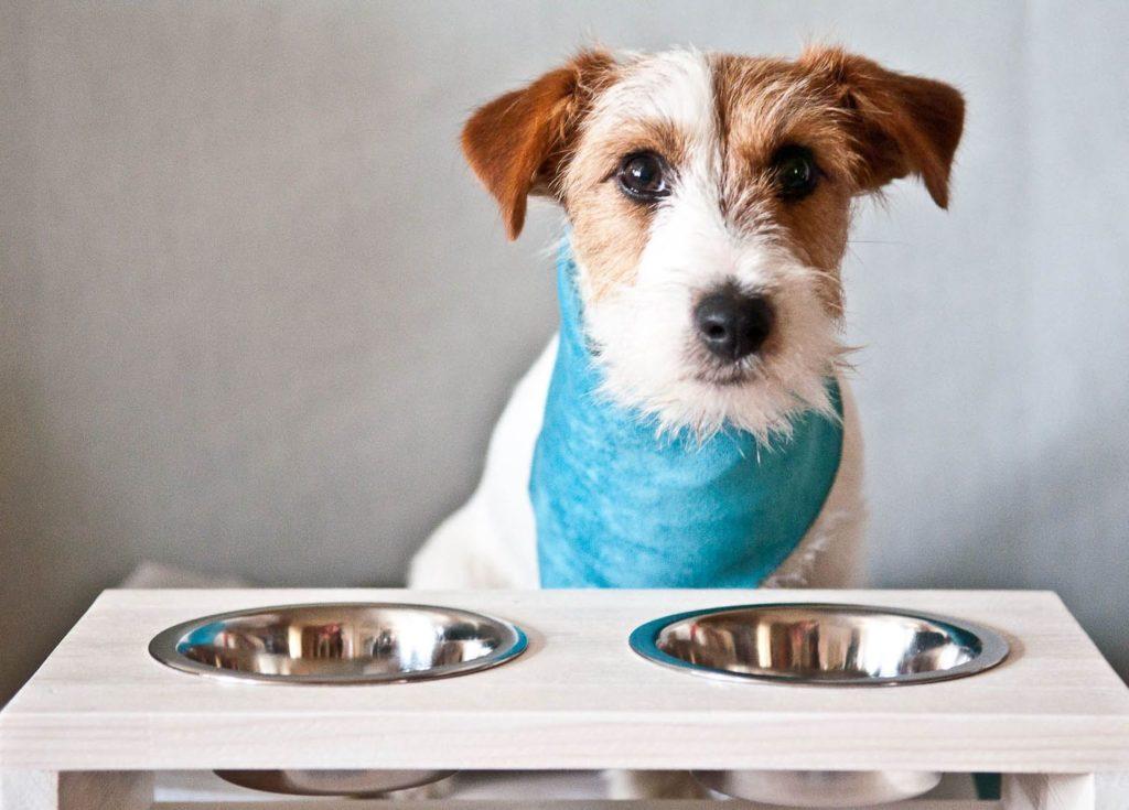 Правильный выбор корма поможет организму собаки бороться со слишком частой линькой