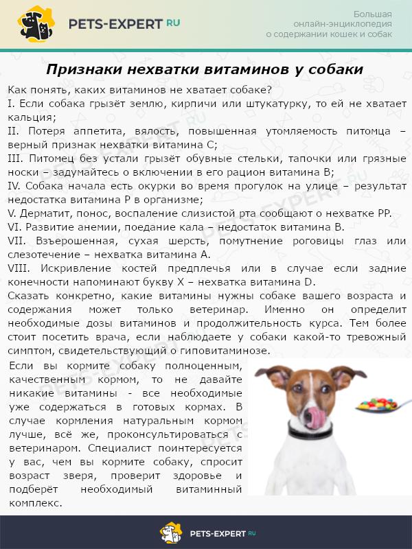 Признаки нехватки витаминов у собаки