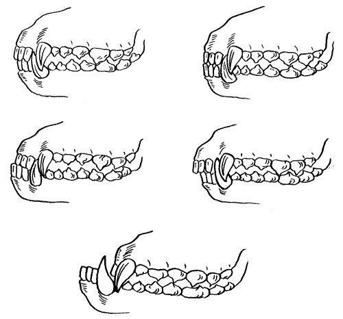 Прикус влияет на скорость истирания зубов