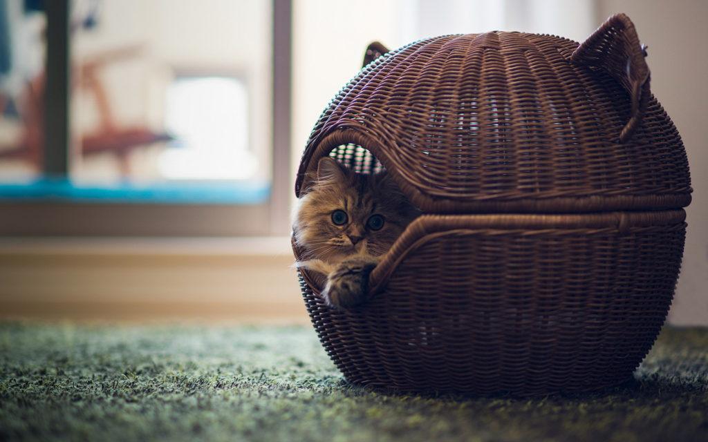 Приучение котенка к домику
