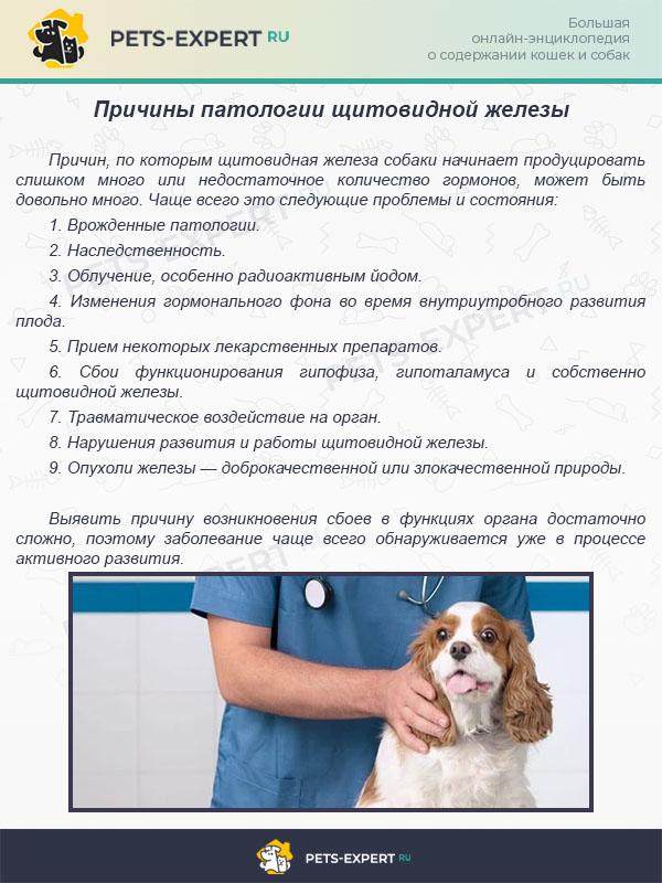 Причины патологии щитовидной железы