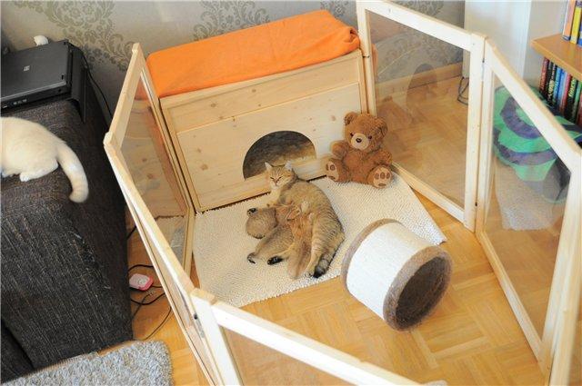 При желании, специальный родильный дом для кошки можно приобрести