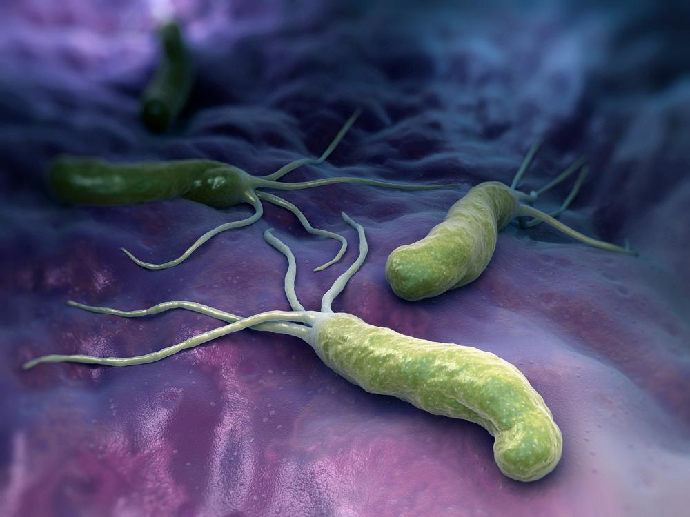 При заражении бактерией хеликобактер назначают курс антибиотиков