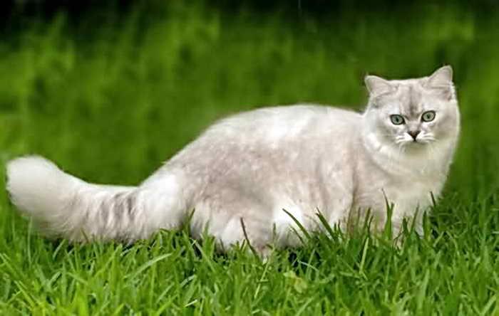 При первой возможности кошка захочет исследовать окрестности