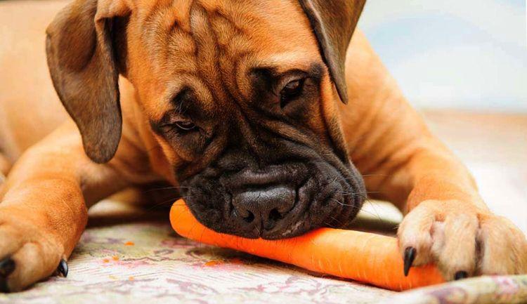 """При правильно подобранной схеме питания, собака без проблем переходит на """"натуралку"""""""