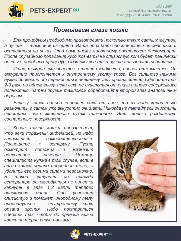 Промываем глаза кошке