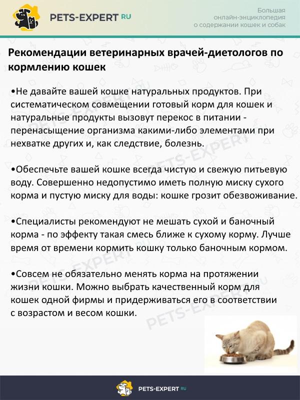 Рекомендации врачей-диетологов по кормлению кошек