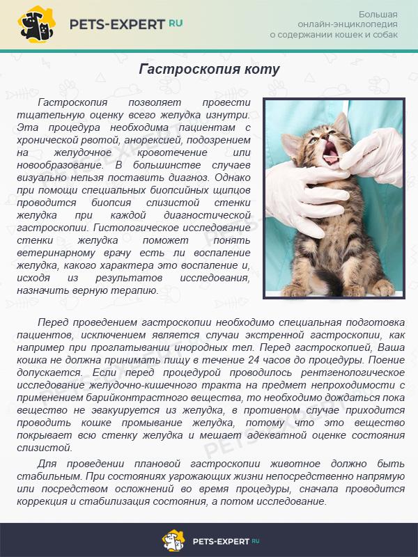 Гастроскопия коту