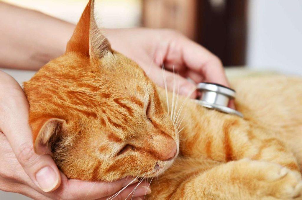 Своевременный осмотр у ветеринара убережет питомца от пагубных последствий отравления