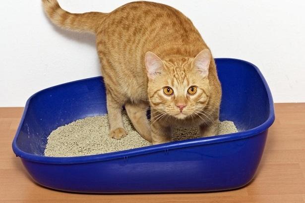 Скопление каловых масс и мочевой кислоты опасно для жизни кота