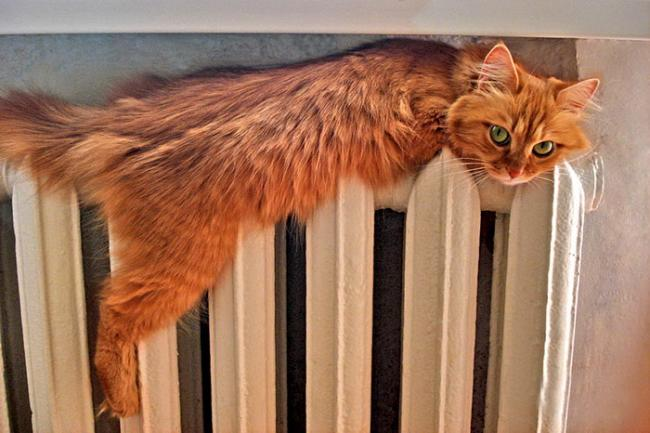 Следите за тем, чтобы кот не пробирался к теплым местам во избежание перегрева раны