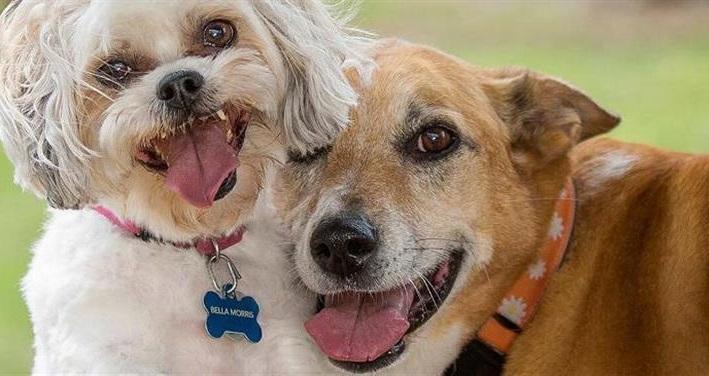 Собака без поведенческих нарушений предпочитает общение с себе подобными