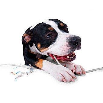 Собака грызет провод