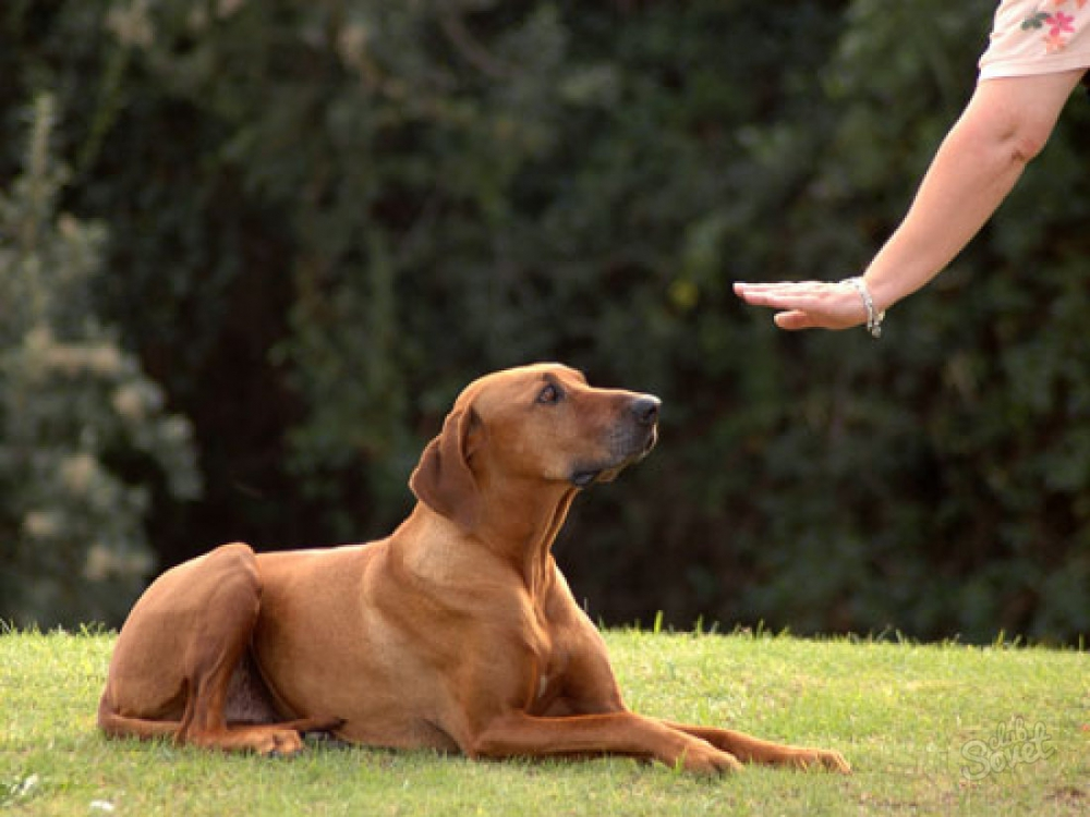 Собака занимает последнее место в иерархии семьи