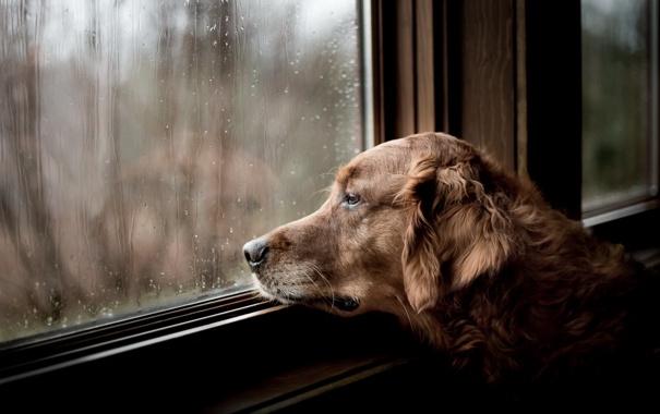 Собака может попытаться выскочить в окно