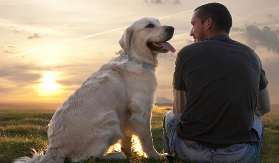Собака с хорошим воспитанием уважительно относится к хозяину и членам его семьи