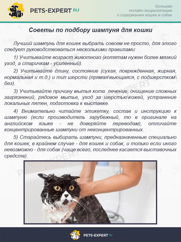 Советы по подбору шампуня для кошки