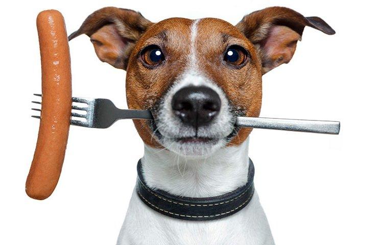 Сосиска - не лучшая еда для охотничьей собаки