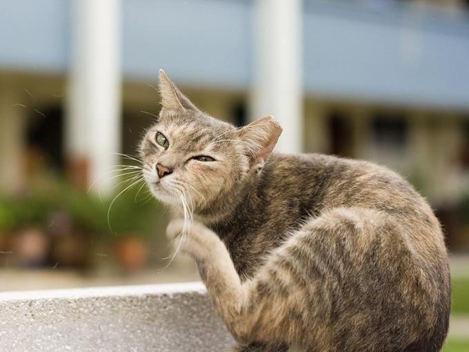 Средство может вызвать у кошки аллергию
