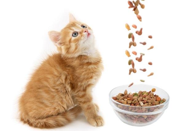 Сухие корма для котят состоят из мелких фракций, поэтому их легче пережевать