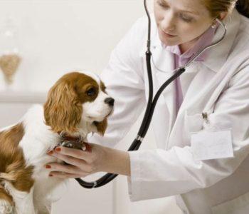 Тактика лечения зависит от причины заболевания
