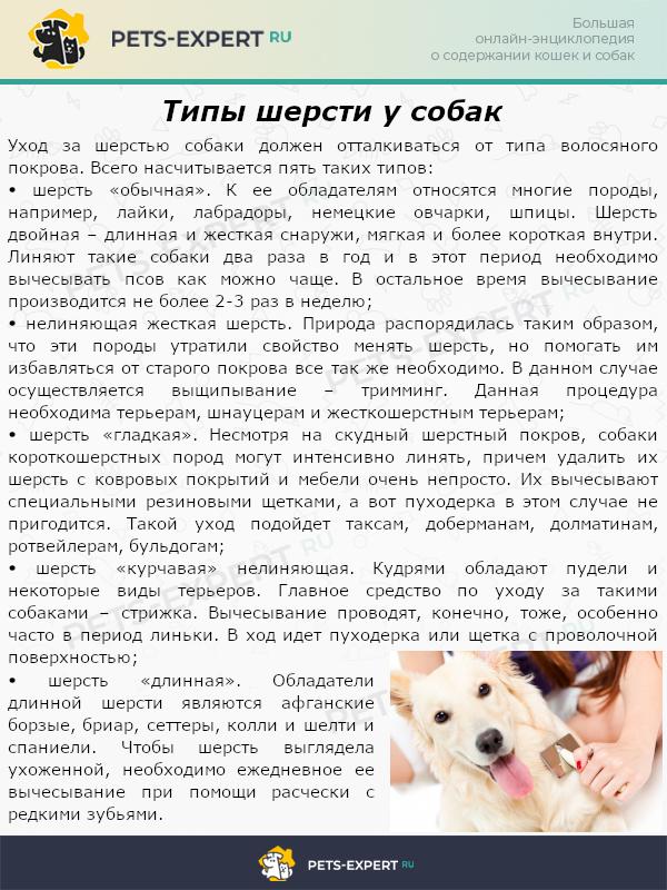 Типы шерсти у собак