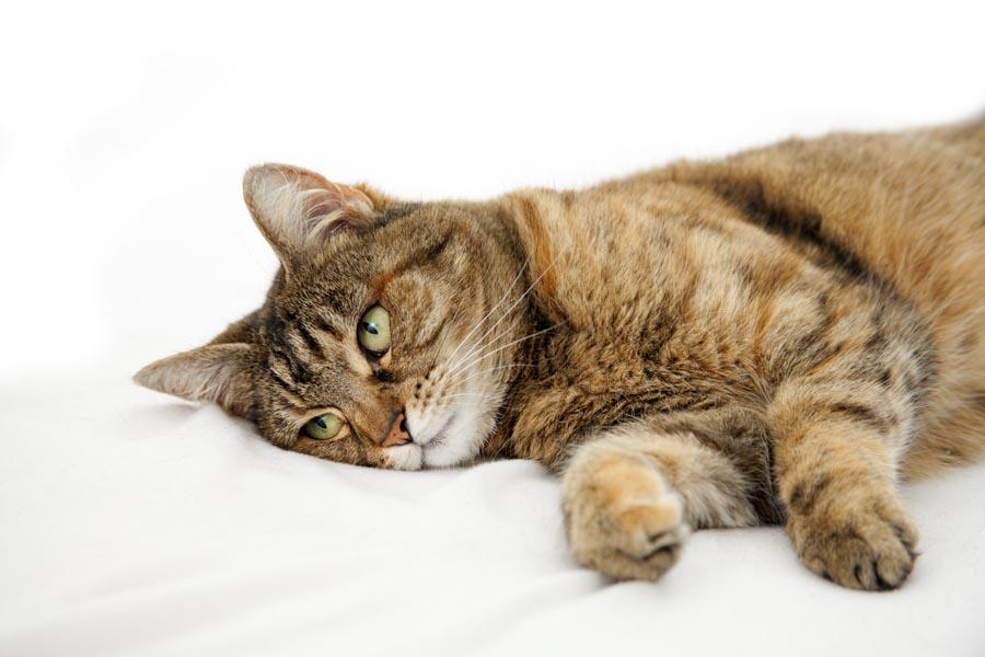 Тяжелые заболевания у кошек